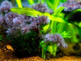 algues noires