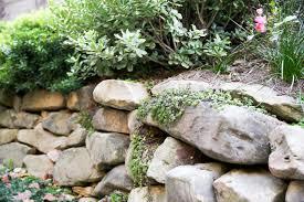 muret de pierres naturelles avec plante